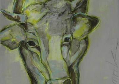 Kuh gelb | 90x90cm